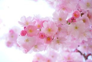 お花見したいけど彼女は花粉症!喜ばれるのはどんなデート?
