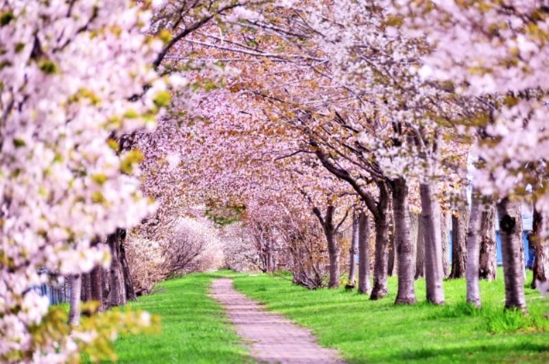 4月14日(土)【お出かけ好きにオススメ】日本の四季&『和』を愛する男女限定パーティー