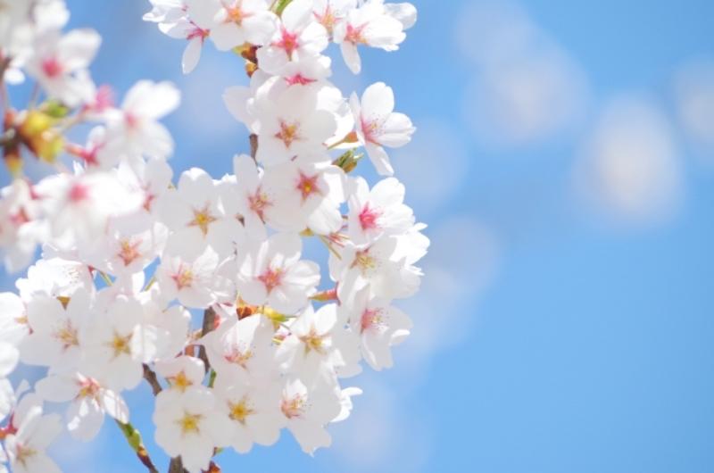 4月1日(日)【桜彩る季節がやってきた♥】縁起担ぎで心機一転!春の縁結びパーティー♪