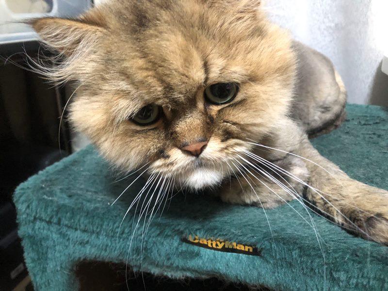 ゾロ目で大安で縁起の良い猫の日だから不安に負けないで!