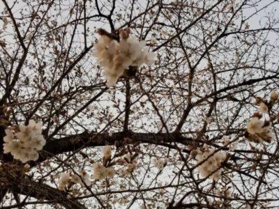 春の足音が聞こえてきました。2021年版。